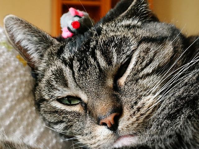 mi gato no juega porque no le apetece