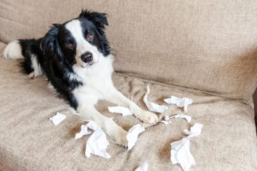 mi perro come papel