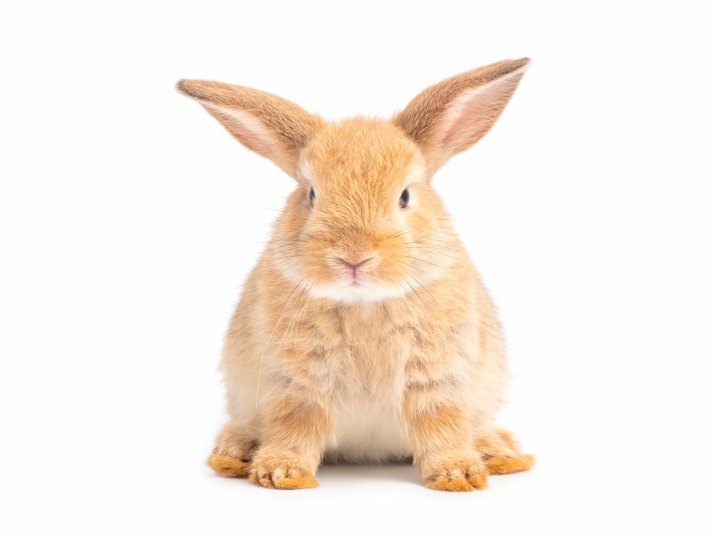 no puedes descuidar la higiene del conejo
