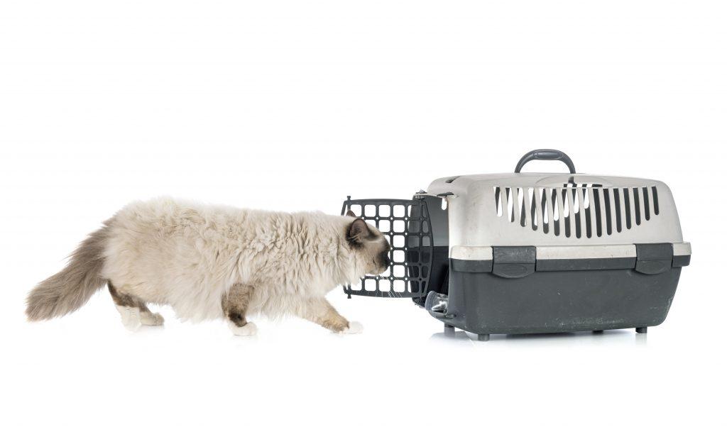 primeros pasos para acostumbrar al gato al transportín