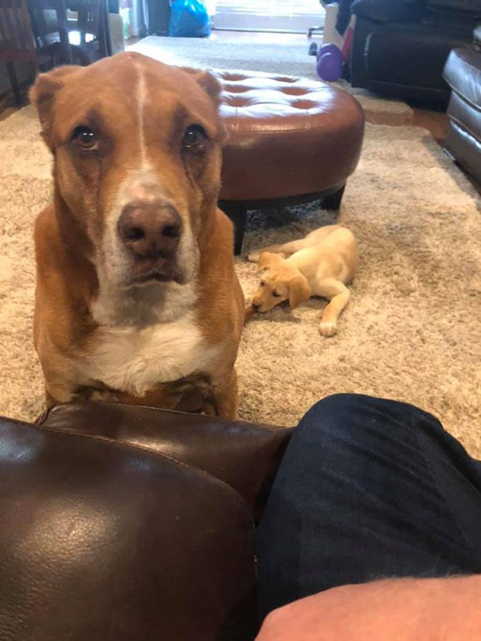 reacción de perro a su hermano pequeño