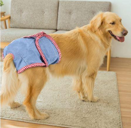 recomendaciones sobre los pañales para perros
