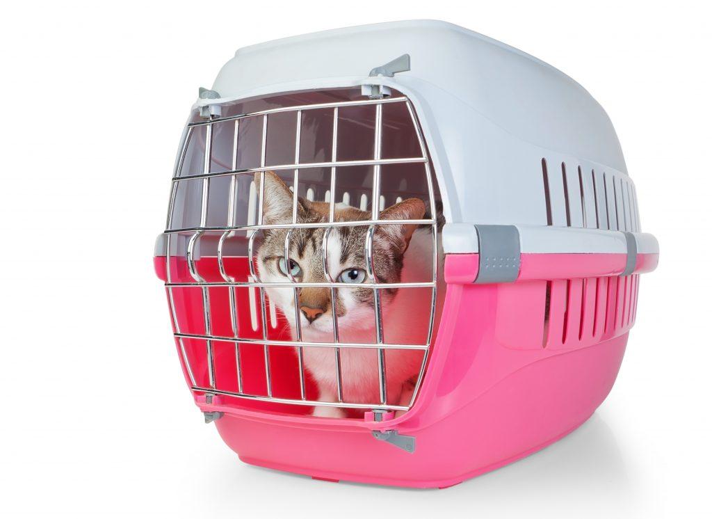 ten en cuenta las características del transportín de tu gato