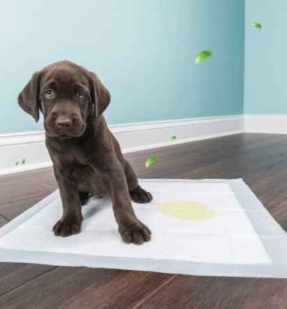 tipos de pañales para perros el empapador