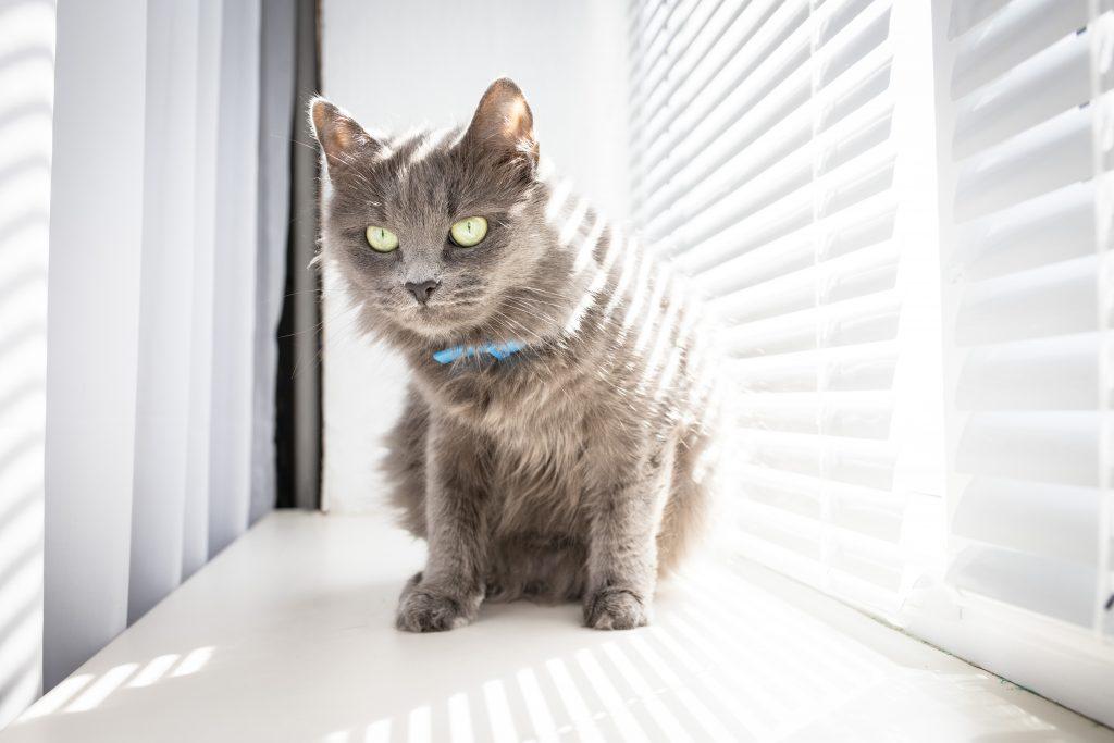 características del mejor collar para gatos