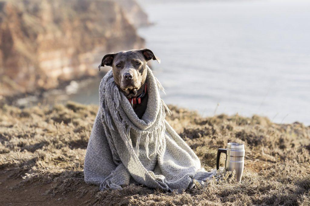 cómo hacer que un perro no pase frío