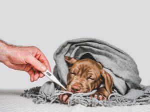 cómo prevenir el resfriado en perros