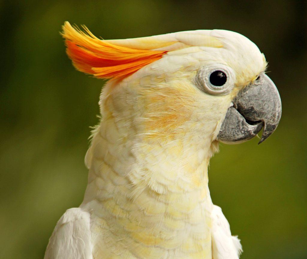 cuidados del pico de las aves a tener en cuenta