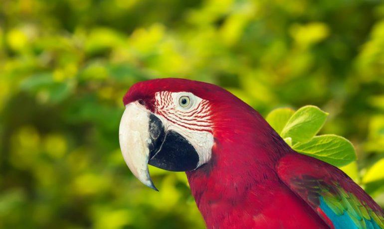 cuidados del pico de las aves más importantes