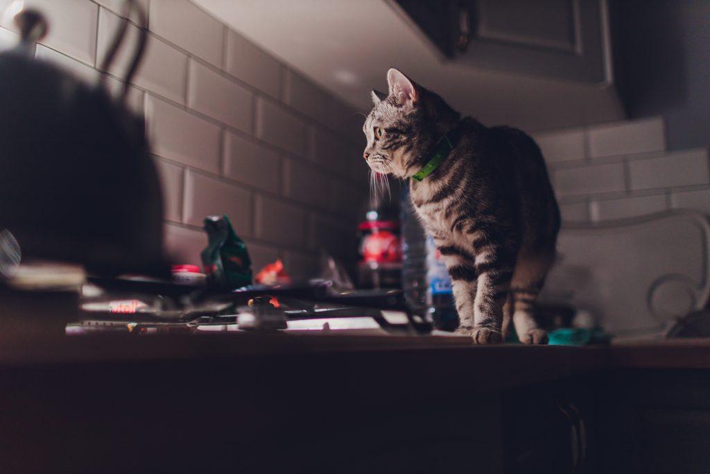 hay que distraer al gato para evitar que se suba a la encimera de la cocina