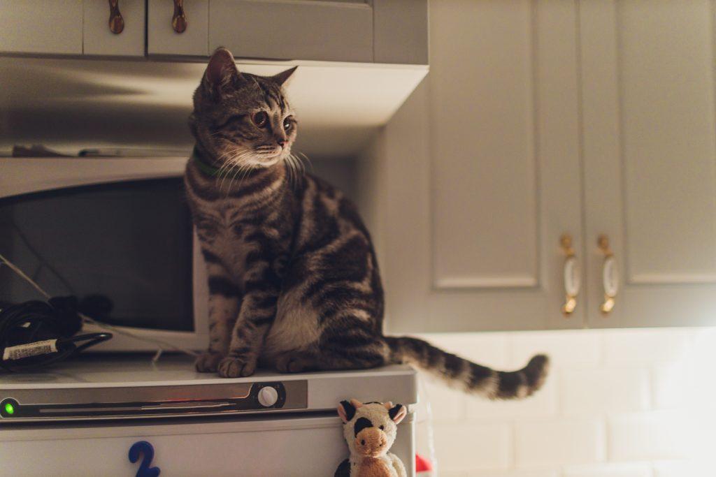 las razones que llevan a un gato a subirse a la encimera son muchas