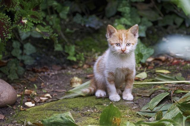 mi gato come tierra para descubrir el mundo