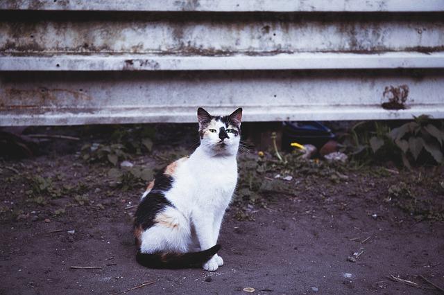 mi gato come tierra por el síndrome de pica