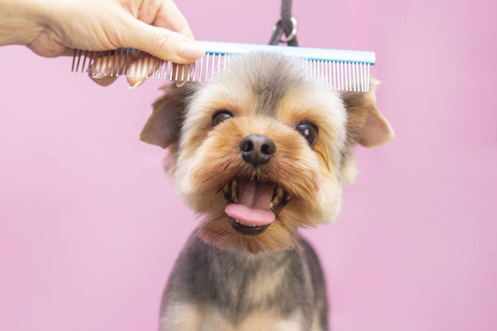 peina a tu perro para mantenerlo limpio