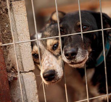 principales causas de abandono animal