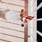 Riesgos de tener al perro en el balcón