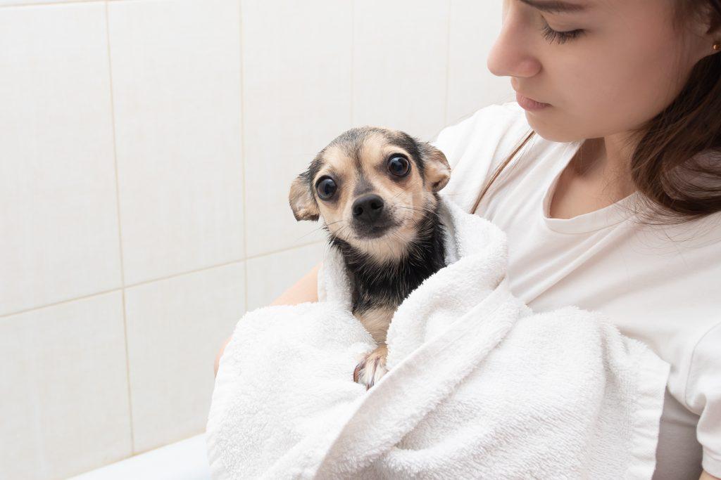 sécalo bien para prevenir el resfriado en perros