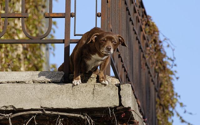 Tener al perro en el balcón puede ocasionar su caída