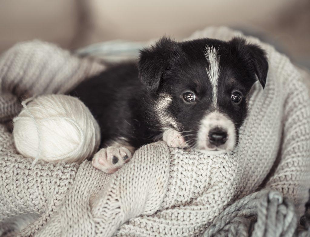 tips para que tu perro no pase frío
