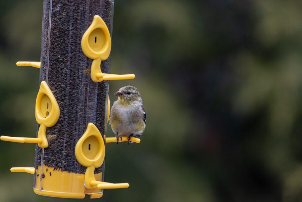 tips sobre cuidados del pico de las aves más importantes
