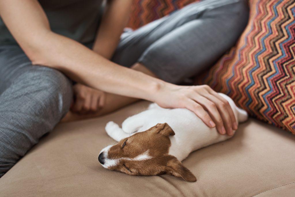 acariciar a un perro