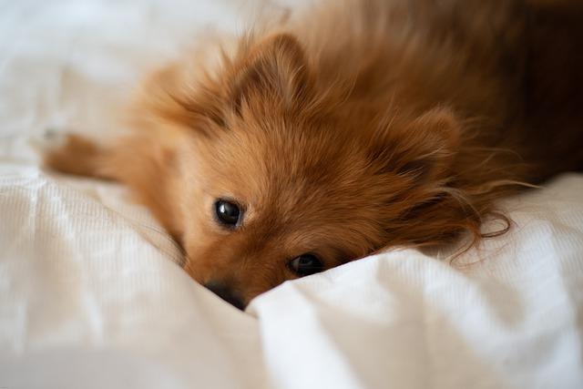 circunstancias en las que no debemos dormir con el perro