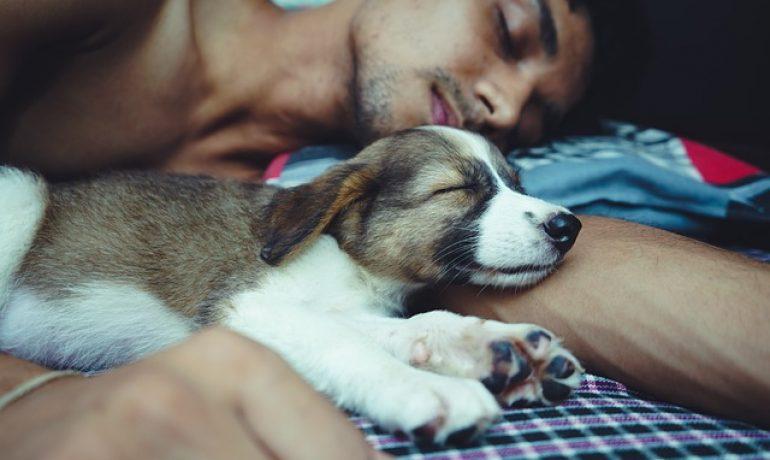 cuándo no debe dormir el perro conmigo en la cama
