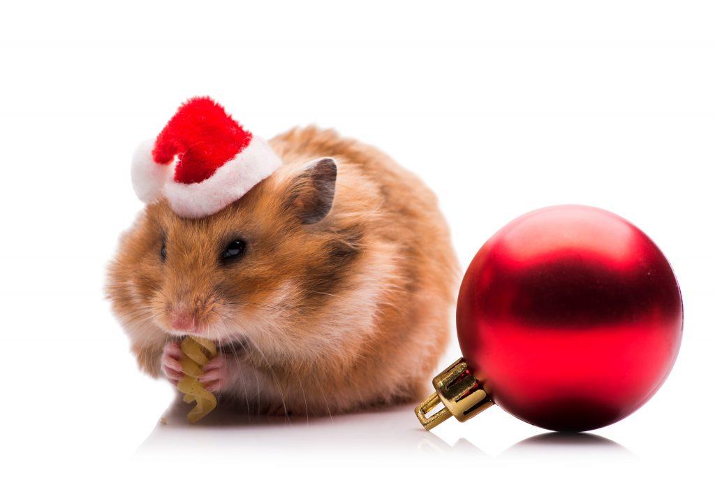 cuidados a tener en cuenta en navidad con las mascotas