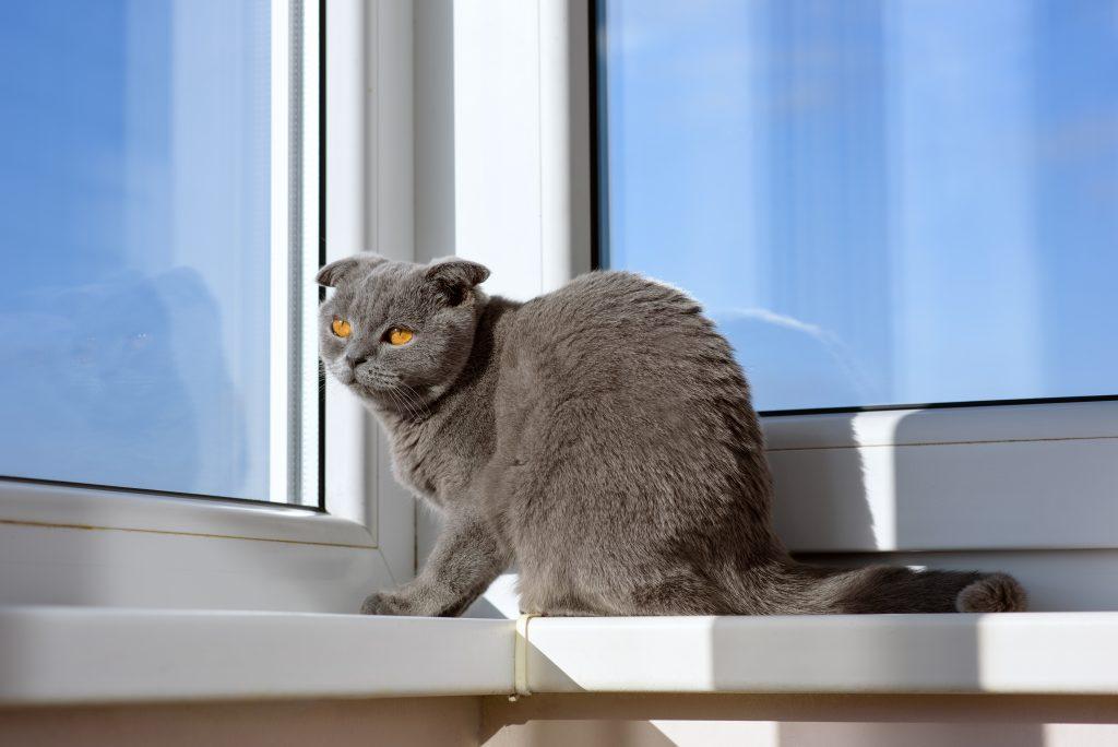 deja que tu gato mire por la ventana con seguridad