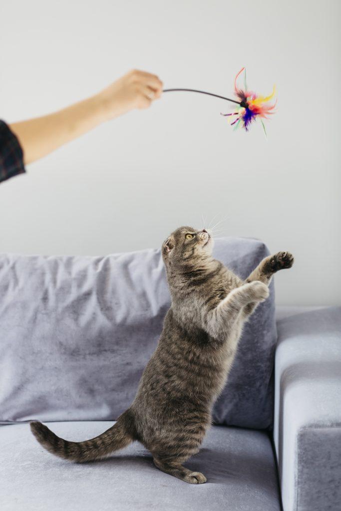 juega con tu gato