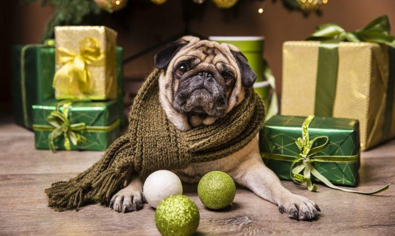Los peligros navideños más frecuentes para las mascotas
