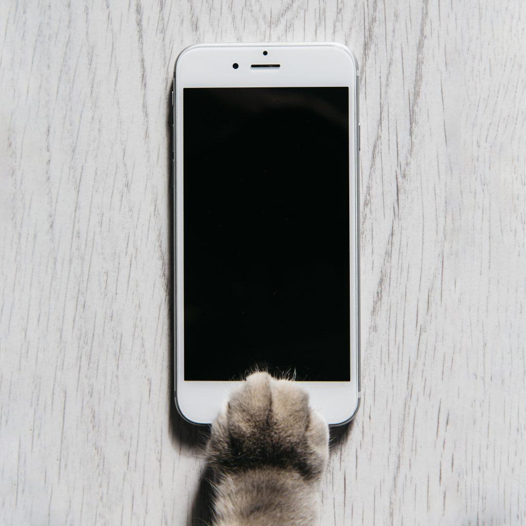 meowtalk app para traducir a los gatos