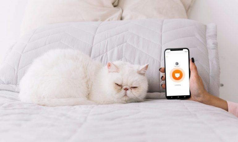 meowtalk la app que traduce a los gatos