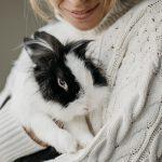 Mi conejo orina encima de mí