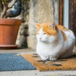 mi gato se escapa de casa