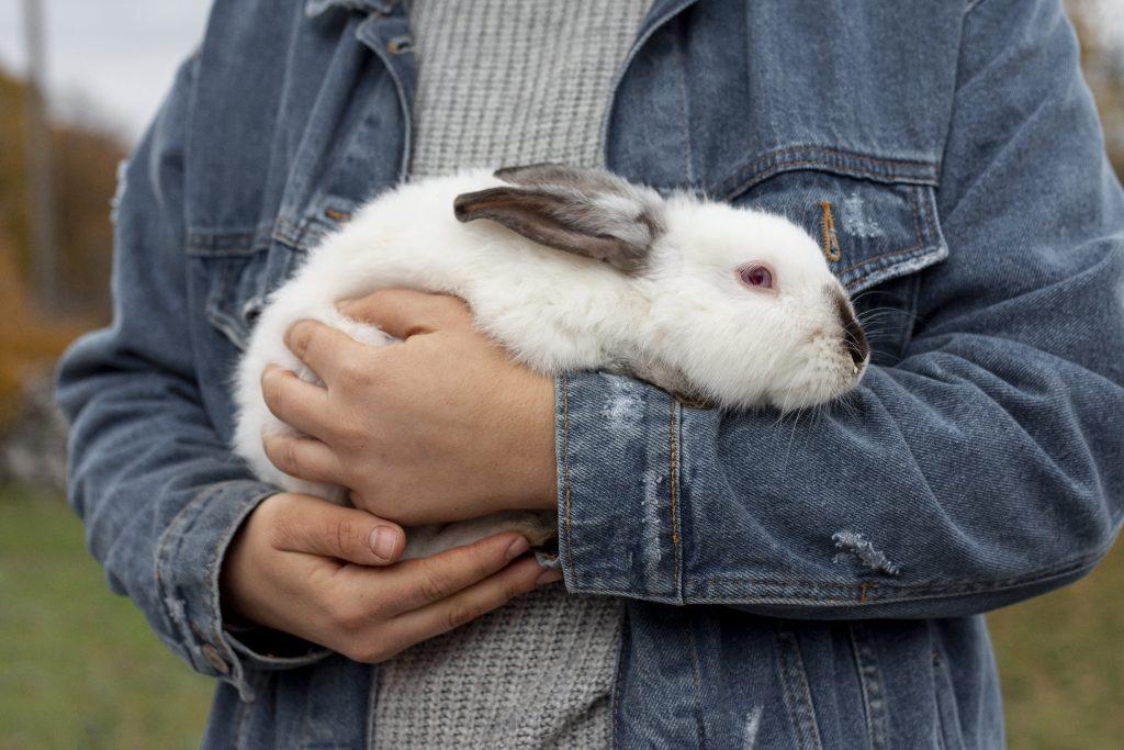 motivos por los que mi conejo orina encima de mí