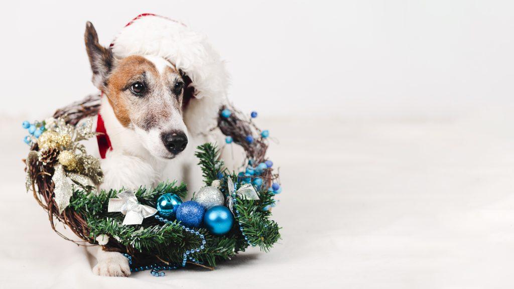 navidades con mascotas