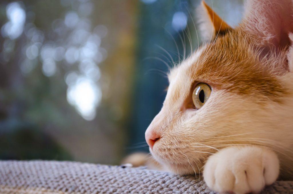 ofrece un entorno seguro y tranquilo si tu gato se escapa