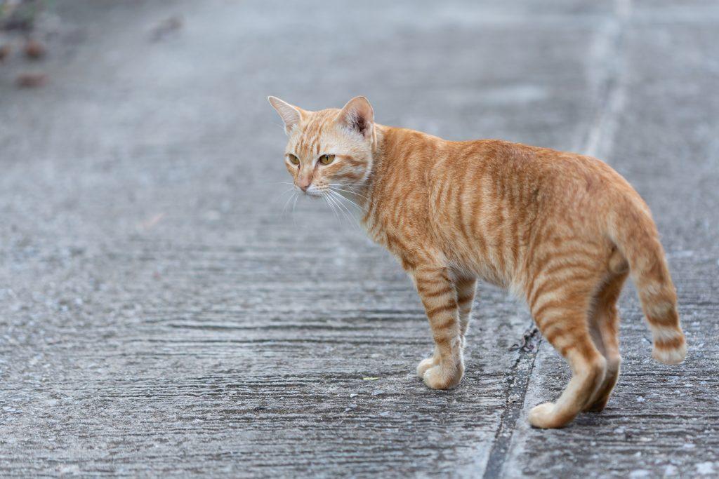 qué hacer para que un gato no escape de casa