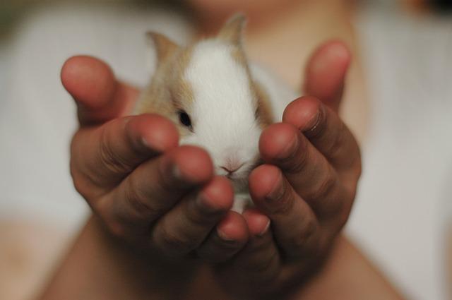 razones por las que mi conejo rocía orina