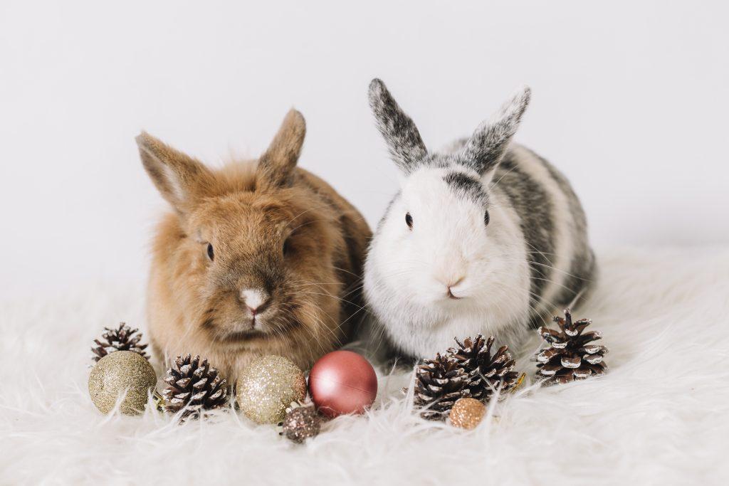 riesgos con las mascotas en navidad