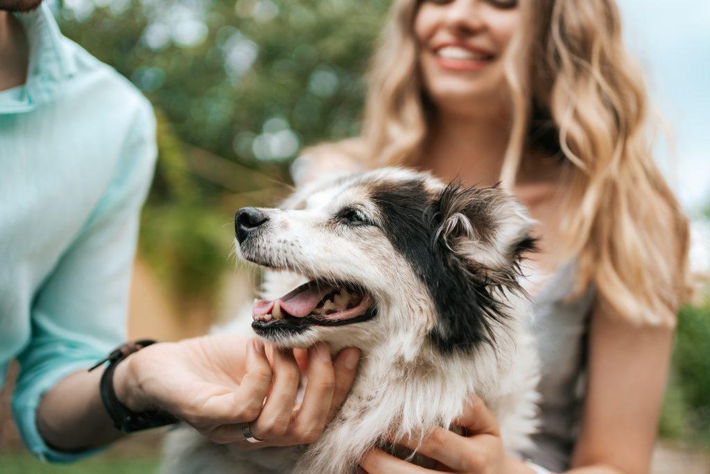 tips para acariciar a un perro
