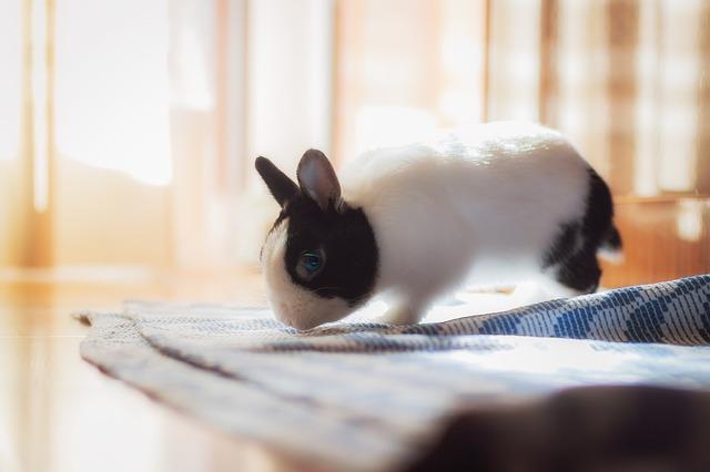tu conejo debe tener confianza para no orinar encima de ti