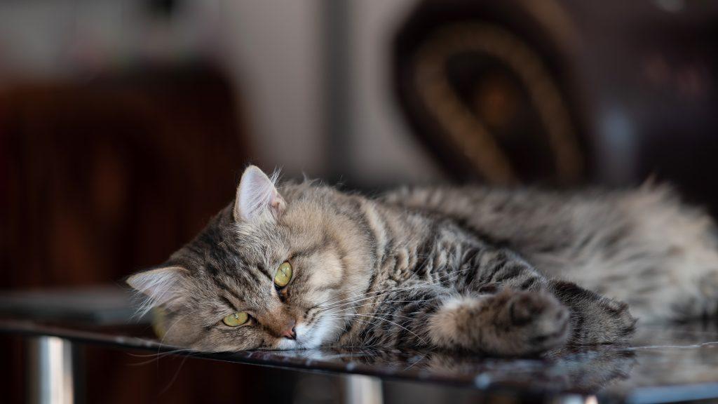un gato aburrido dormirá mucho más