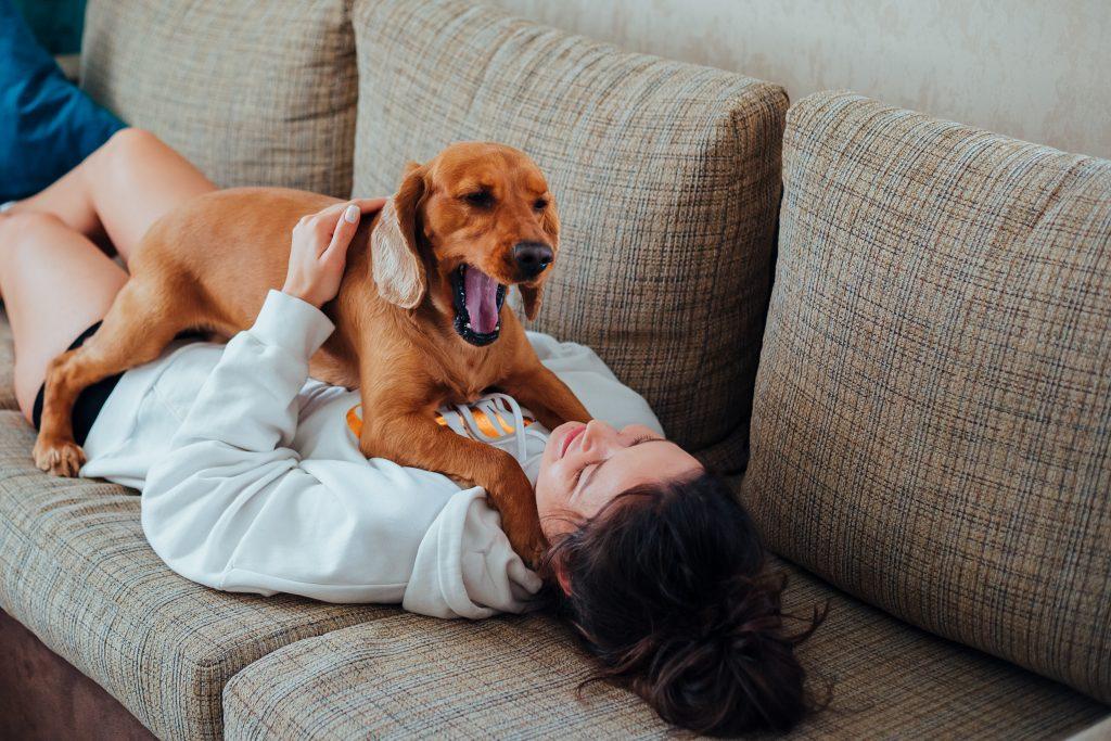 bostezo en perros por aburrimiento