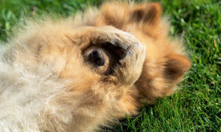 cómo evitar gases en perros