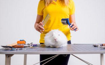 Cómo evitar los nudos en el pelo del conejo
