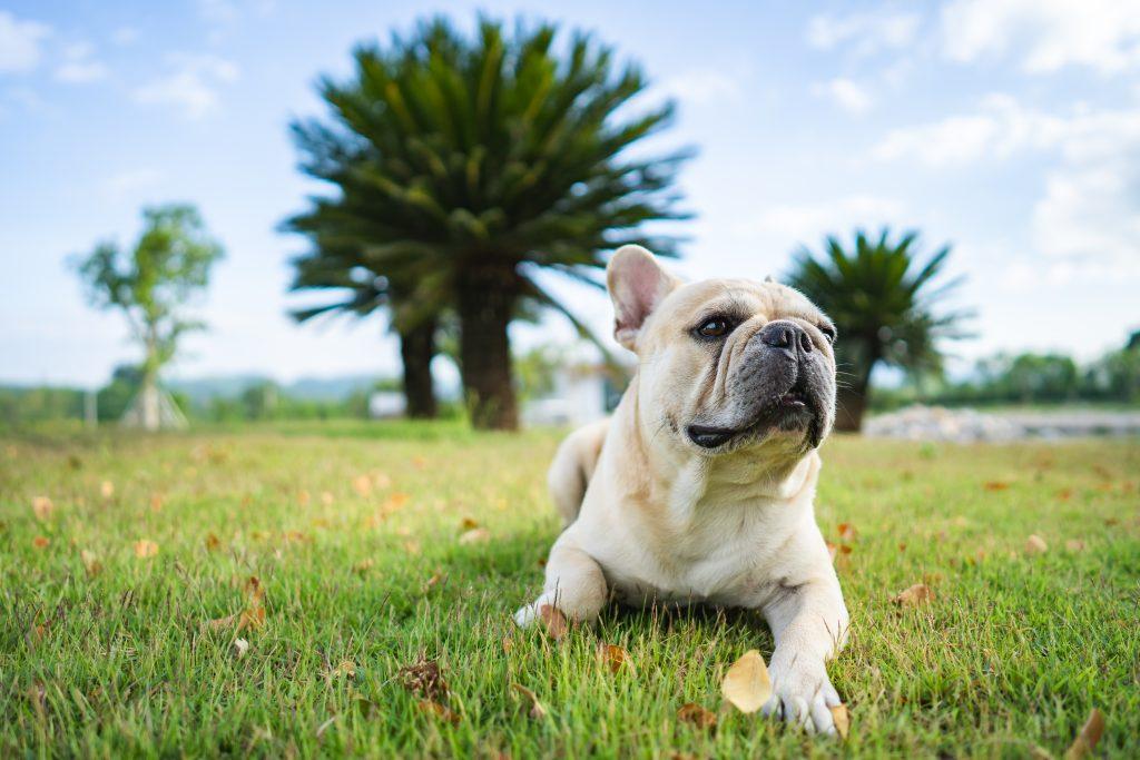 consejos para evitar gases en perros