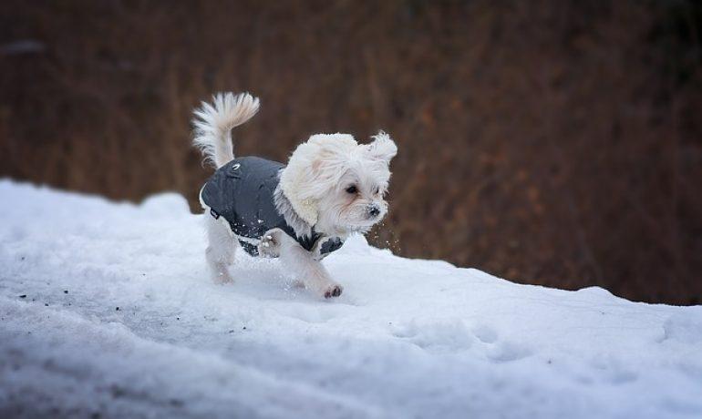 cuánto frío soporta un perro según tamaño o raza