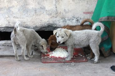 El arroz es bueno para los perros